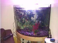 Tropical setup inc fish, 200 ltr Corner tank