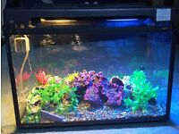 Fish tank with all accessories for sale