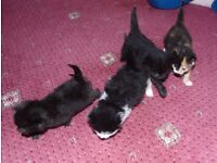 kittens for sale 4 wks
