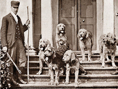 OTTERHOUND CHARMING DOG GREETINGS NOTE CARD MAN ON STEPS WITH SIX DOGS
