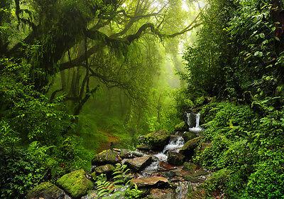 XXL Poster 100 x 70cm wilder Urwald mit Bachlauf über Steine, grüner Dschungel