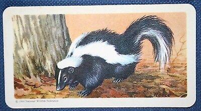 STRIPED SKUNK      Vintage Colour Card   VGC