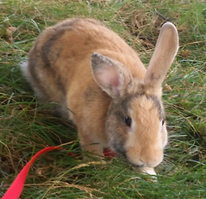Bunny for sale best offer