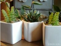 3 mini faux cactus & white square pots