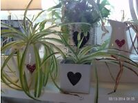 4 heart design planters/jugs