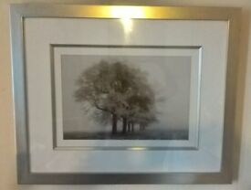 Black and White Picture of Trees Laura Ashley