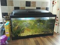 Live plants fish tank