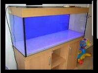 Juwel Rio 240l aquarium with beech stand and external filter
