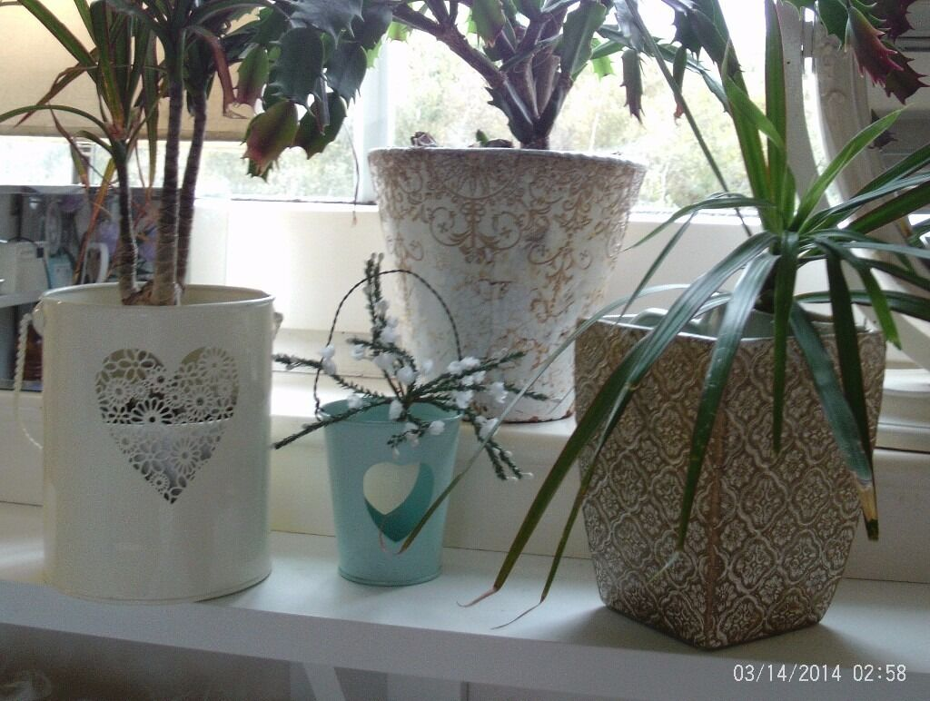 4 plantes / candle holders