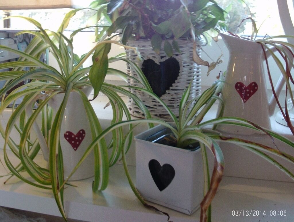 4 heart planters / candle holders