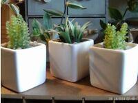3 mini faux cactus & white square pots
