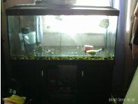 fish tankand lid on stand