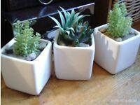 3 mini faux cactus & white pots