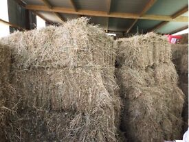 2016 HAY for sale