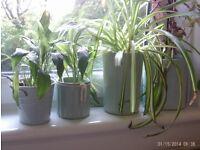 4 planters