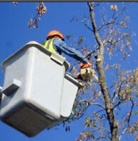 CHEAPEST AND MOST EFFICIENT REMOVAL OF DANGEROUS TREES!!!