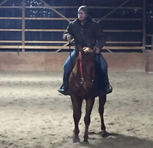 4 year old registered quarter horse gelding