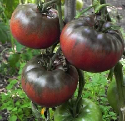 Heirloom Russian Tomato BLACK KRIM❋100 Seeds❋RICH SWEET FLAVOR Combine (Black Krim Heirloom Tomato)