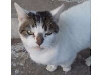 Cat for sale & needs rehoming urgently