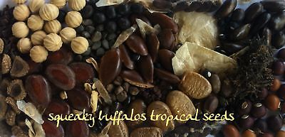 Squeaky Buffalos Tropical Seeds