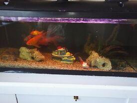 Whole fish tank set up