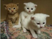 Kittens looking for good home *****SOLD