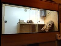 vivarium,large oak effect, this is an all you need set up for bearded dragons or similar