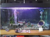 Sorry gone Fish/tank/accessories Free to good home