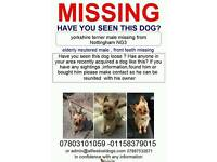 ALFIE IS STILL MISSING