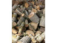 Wanted - unseasoned hardwood tree logs