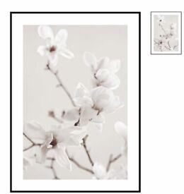 Two magnolia framed prints
