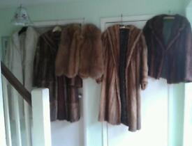 5 X GENUINE FUR JACKETS AND COATS £100 EACH ALL ABOUT SIZES 12 /14