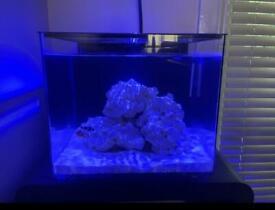 Red starfish Marine acrylic fish tank 55 litre