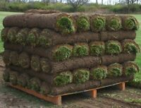 Daily fresh cut sod - $200 per pallet plus HST -