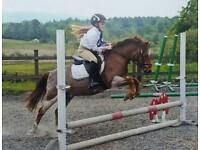 Schoolmaster pony for share/loan