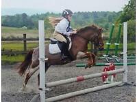 Schoolmaster jumping pony