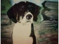PETS PAINTINGS FOR CHRISTMAS FROM £35