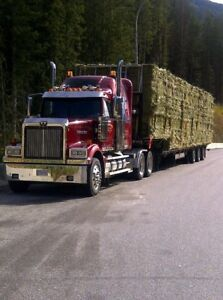 Small alfalfa bales for sale