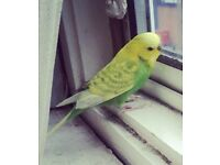 Missing my parrot yesterday at 4pm names Sebastian