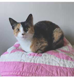 Sweet 1 yr old cat to rehome