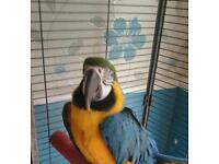 Parrot macaw for sale
