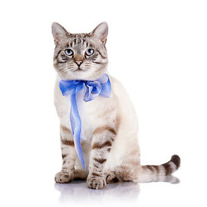 Affordable Professional Cat Grooming