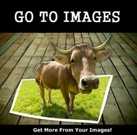 For Photographers, Photojournalists, Graphic Artists and Artists