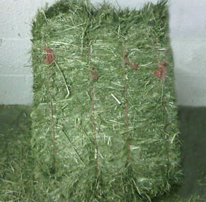 Looking for Square Bales of Timothy Hay