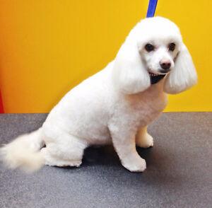 Amazing Pet Grooming at Pawcasso Pet Salon