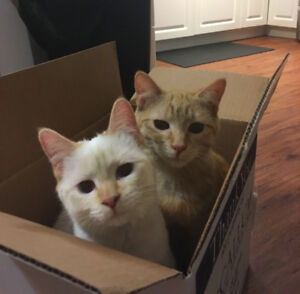 Kittens to a Loving Home