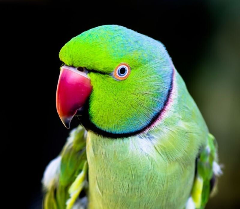 Exotic Bird Treat Organic Hemp Seeds