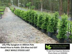 Lilly Pilly Superior Hedging Privacy Fencing ABSOLUTE QUALITY Mudgeeraba Gold Coast South Preview
