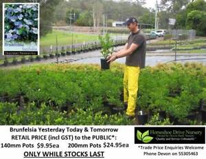 See our FLOWERING PLANTS - Prices from $9.95 Assorted Sizes HS096 Tallai Gold Coast City Preview