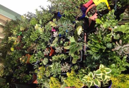 SUCCULENTS & PLANTS very healthy big selection. Greenfields Mandurah Area Preview